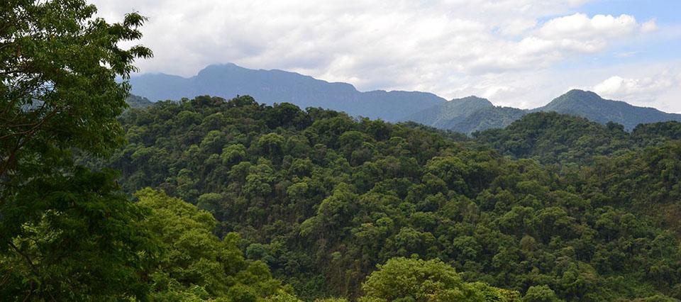 Selva primaria en la provincia de Salta